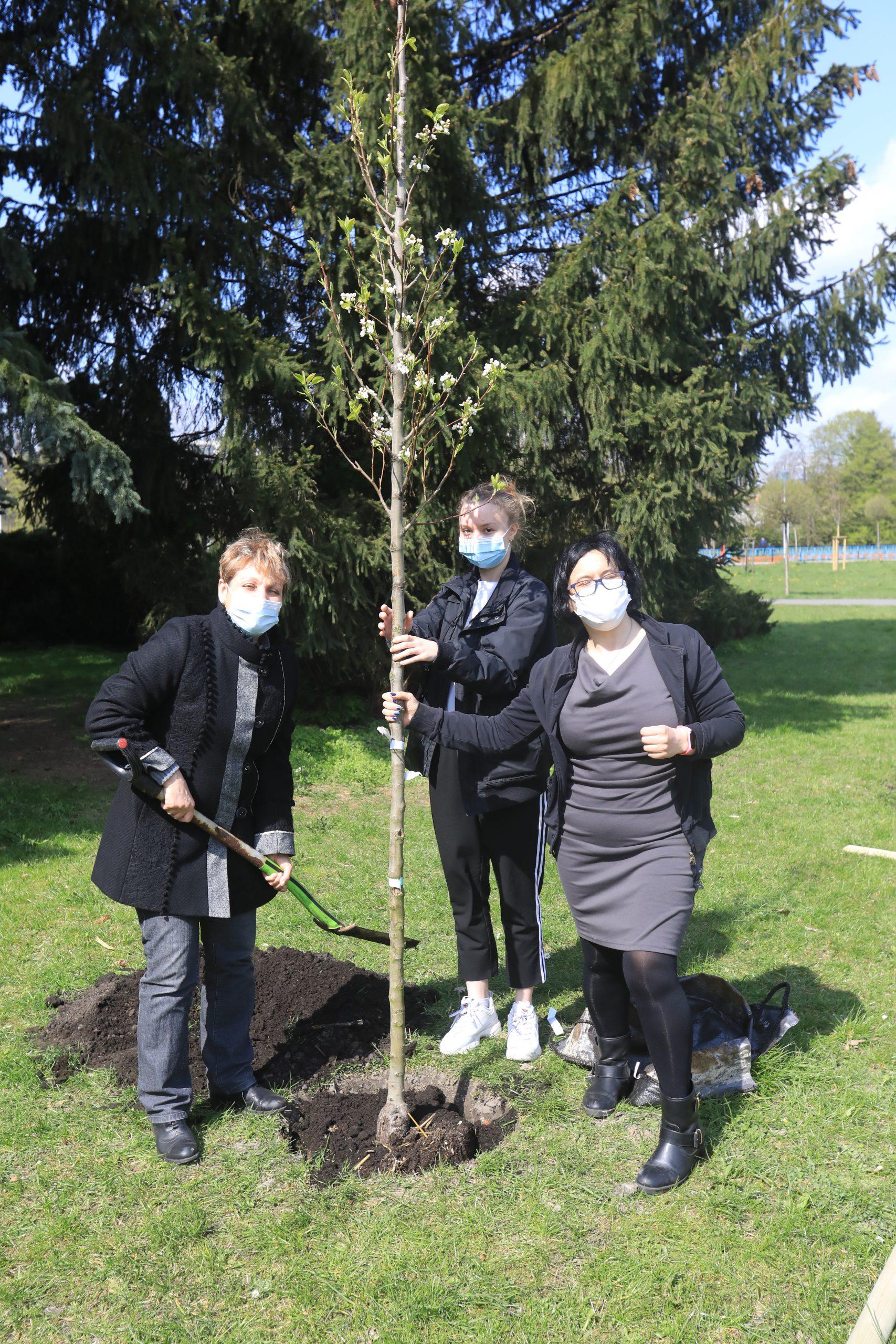 Link do wpisu Sadzenie drzewek